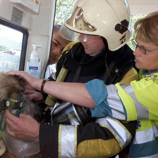 PVG.020624.02 Zutphen - Woningbrand aan de Graaf Otto singel, het hondje Yoki wordt in de ambulance door brandweer en ambulance personeel weer op adem gebracht. Foto: Patrick van Gemert/Zutphens Persbureau