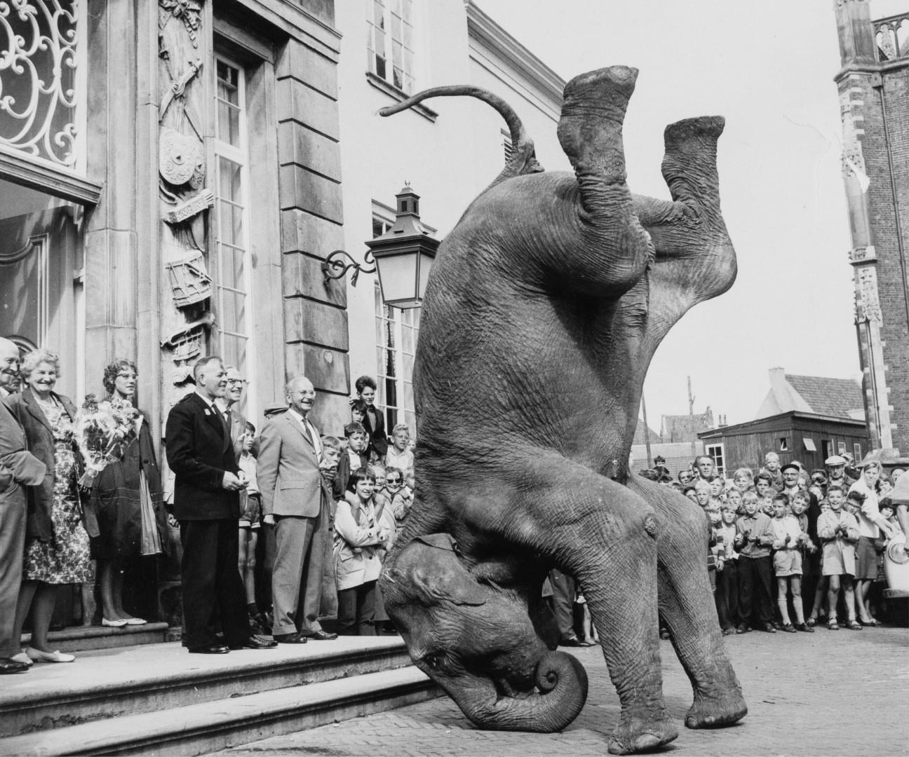 Boltini Olifant met burgemeester De Jong, 1962, collectie Stedelijk Museum Zutphen